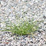 予測不可能なコロナ時代を生き抜くための雑草の戦略